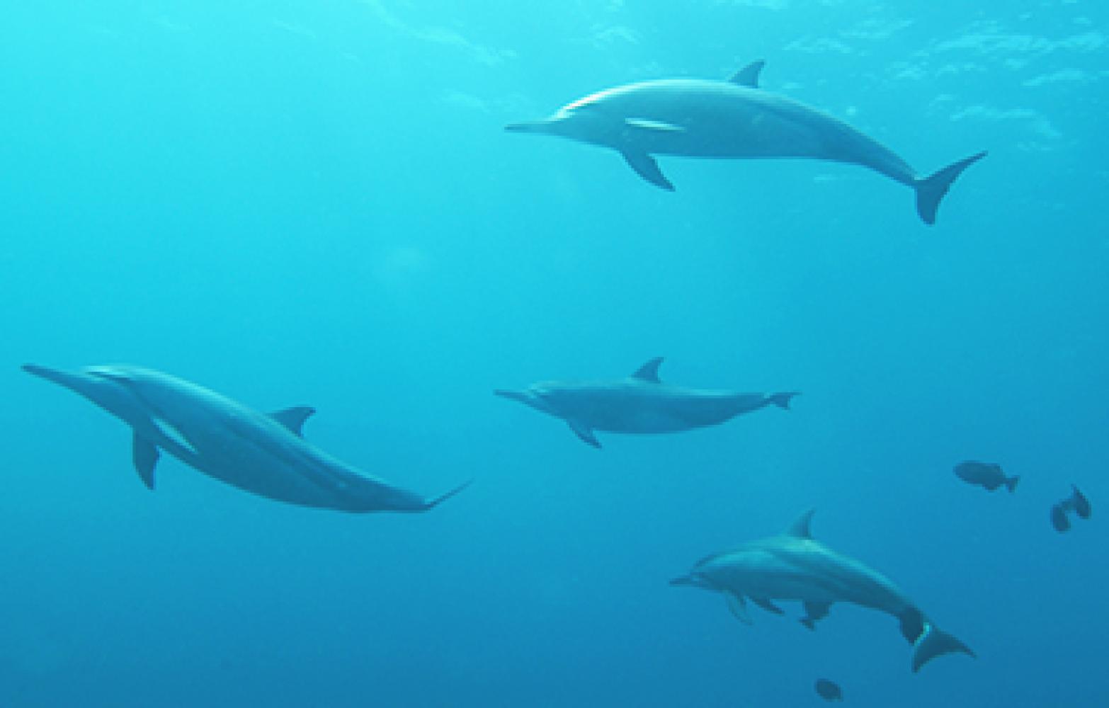 Дельфіни чи собаки Павлова:  як ваш лінійний персонал транслює програму лояльності клієнту